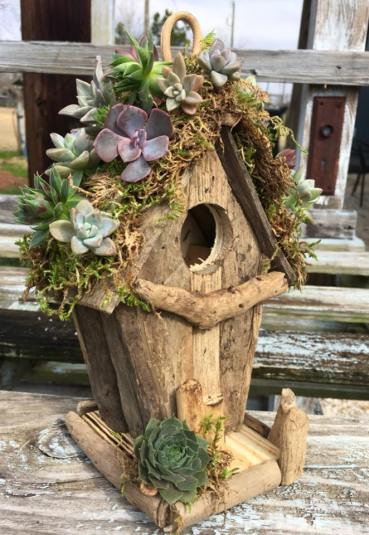 Succulent birdhouse (class offered)