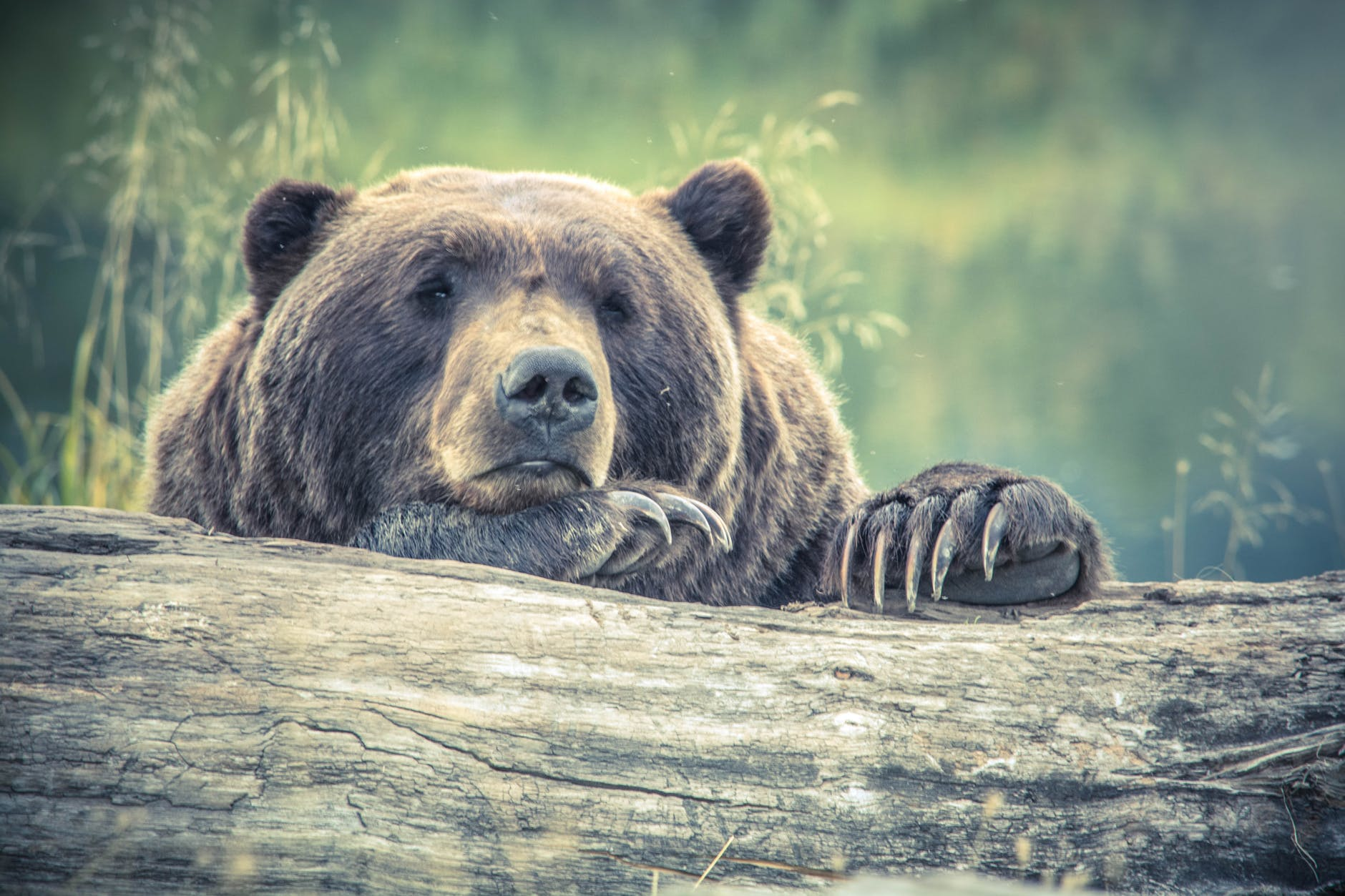 animal animal photography bear big
